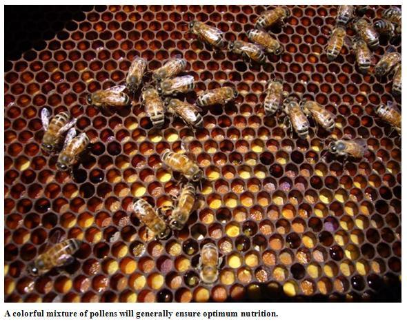 Mixture of pollens