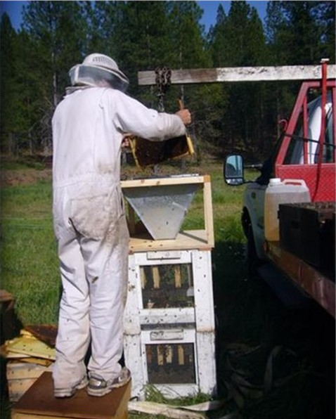 Shaking bees into a bulk cage