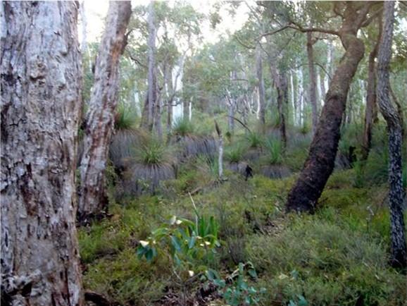 Jarrah Forest
