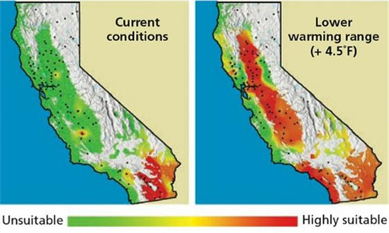 Projected range expansion of pink bollworm in California