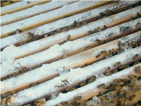 Sugar trapped on top bars of lower brood chamber
